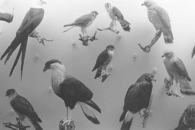 """""""אי הזבובים """"13x18 של הצלם שמחה שירמן -מוזיאון אשדוד לאמנות-1"""
