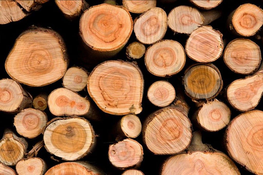 עץ המשאלות-1