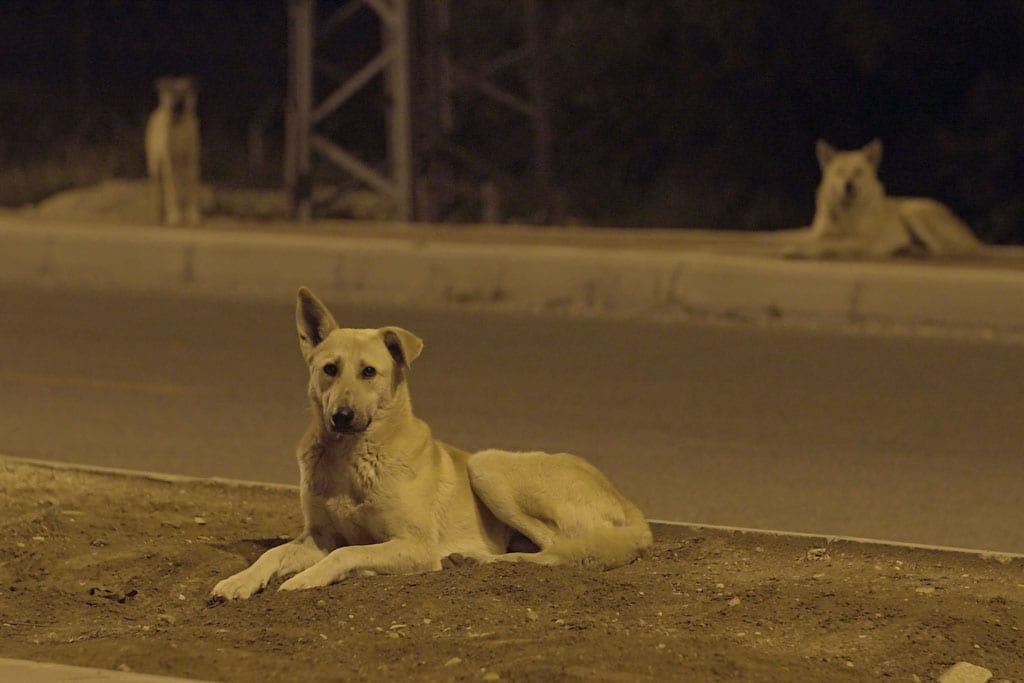 כלבי אשמורת-3