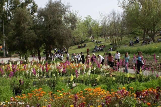 הגן הבוטני ירושלים. צילום: יהודית מרקוס-1