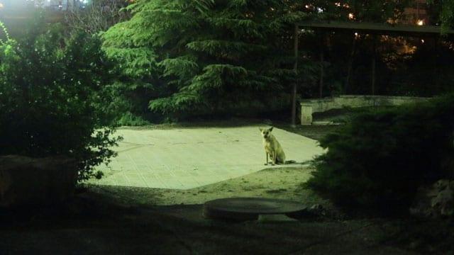 כלבי אשמורת-4