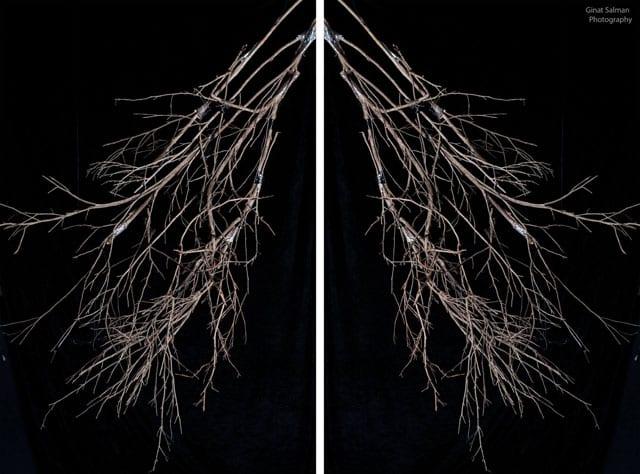 מגזין אמנות, Dying Sun - פרויקט הגמר של גינת סלמן-3