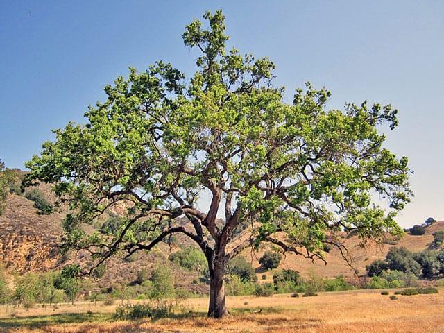 עץ המשאלות-3