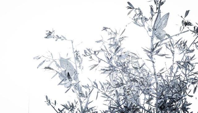 ממנטו מורי. פיליפ פסקוואה. צילום: יח״צ, efifo, אתר אופנה -