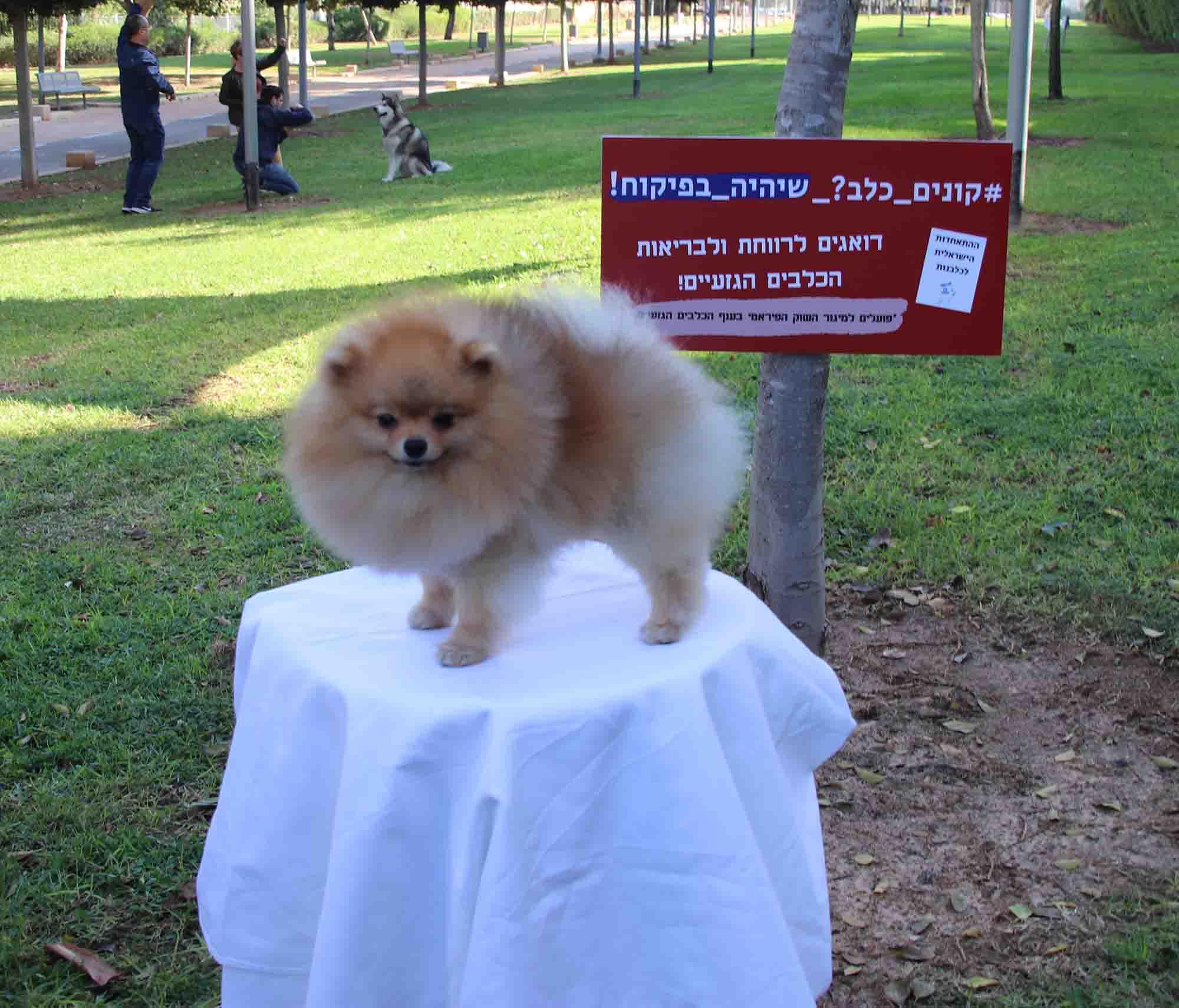 כלב גזעי, חדשות האופנה
