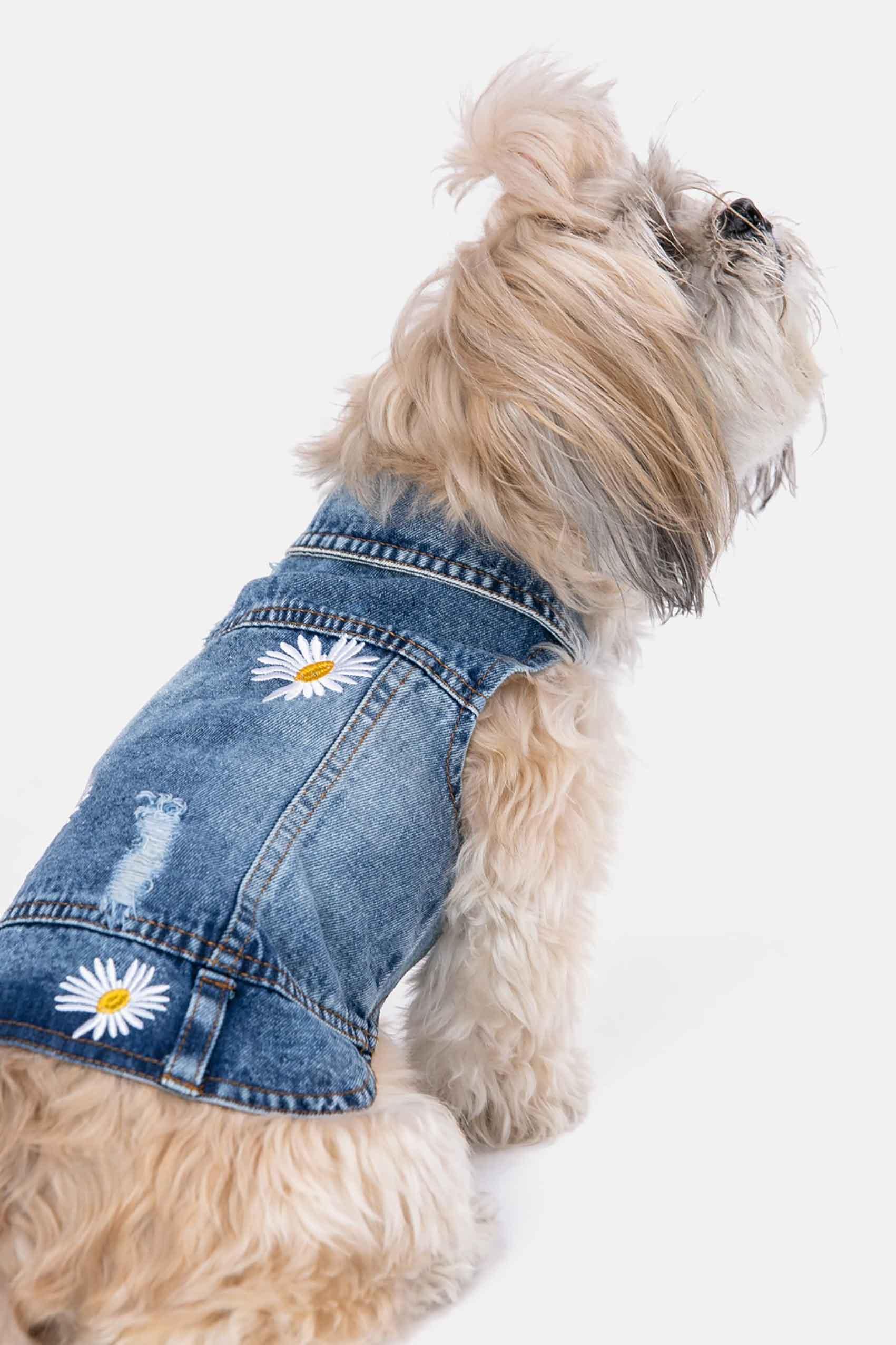 מגזין_אופנה_כלבים_אופנה